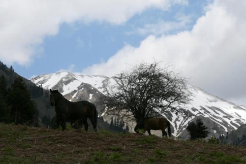Άλογα στην Πρασιά © Δημήτρης Παπαδιάς