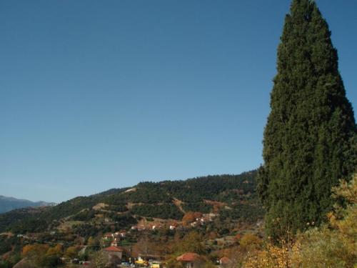 Το κυπαρίσσι της Πρασιάς, με φόντο τον οικισμό Κυπαρισσίου © Δημήτρης Παπαδιάς
