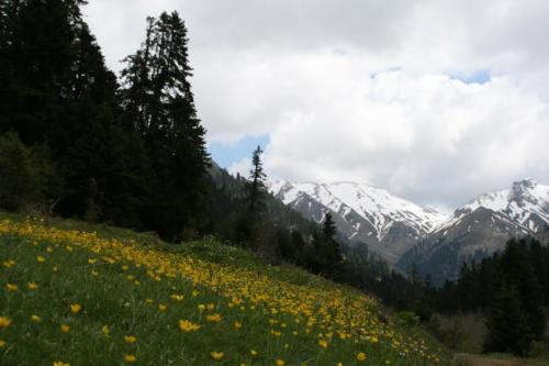 Πρασιά, μαγευτικό λιβάδι με φόντο χιονισμένα βουνά © Δημήτρης Παπαδιάς