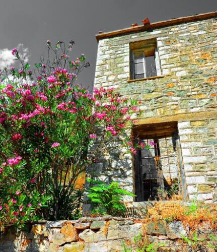 Η φύση μένει ακόμα εδώ, Παλιά Βίνιανη © Γρηγόρης Αντωνίου